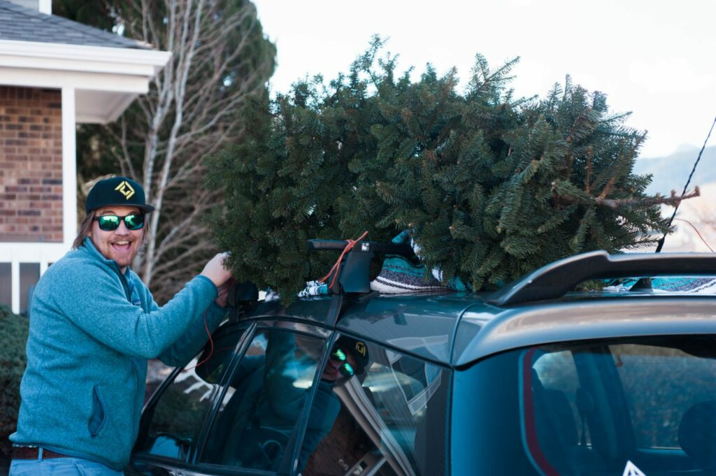 Picking out your Christmas Tree
