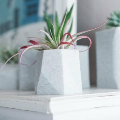 Limited Edition Stone Planters